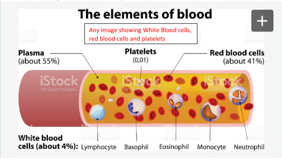 the-elements-of-blood.png